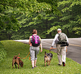Shenandoah National Park - Pet Friendly Rooms Available