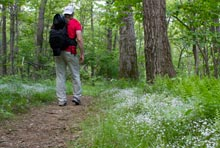 Appalachian Trail Hiker - Shenandoah National Park