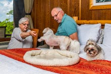 Guests in Room with Pets in Shenandoah National Park