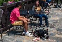 Pet Friendly Terrace Seating at Big Meadows Lodge in Shenandoah National Park